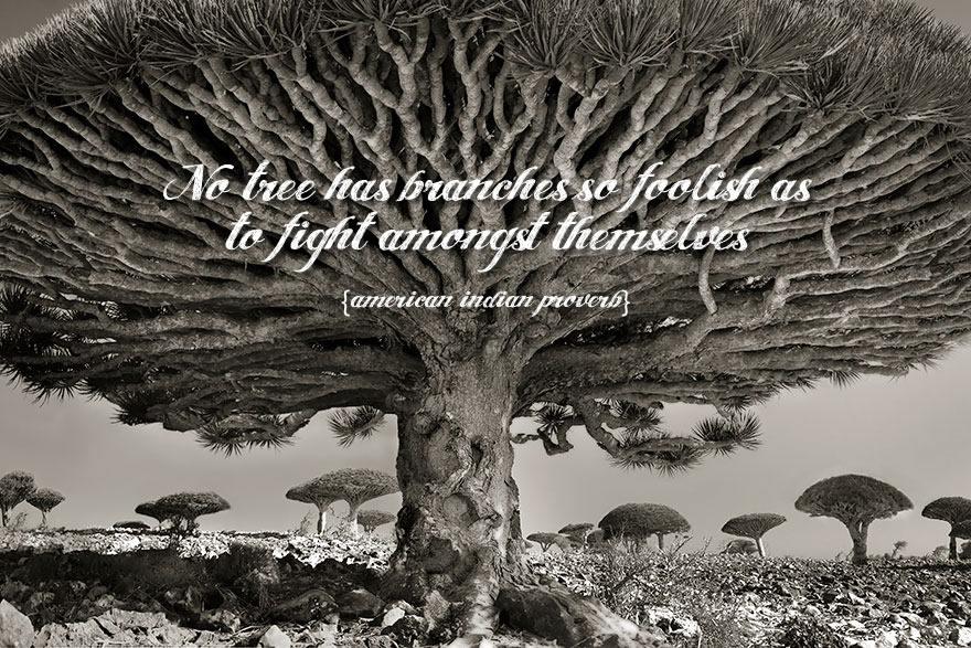 No Tree Is So Foolish